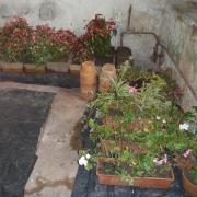 Plantes en nourrice à l'intérieur
